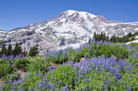 Mount Rainier Stock Photo - 10698754