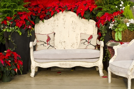 red sofa: Antique White Sofa Chairs Surrounded by Red Poinsettia Stock Photo