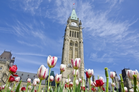 canada flag: Parliament Hill Ottawa and Tulips