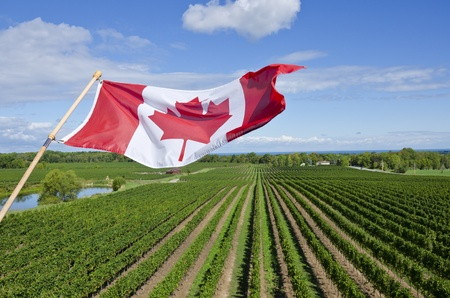 Canadian Wine Industry photo