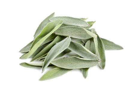 Fresh Sage Leaves Isolated on White