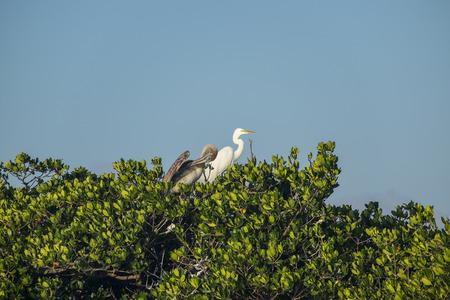 Roekenkolonie in Florida Everglades