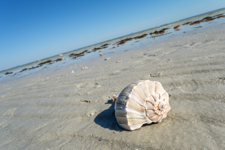 sealife: Seashells on the Beach