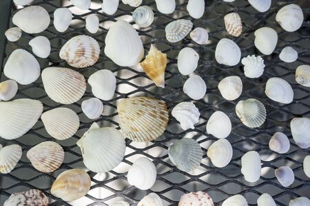 shelling: A Collection of Assorted Seashells
