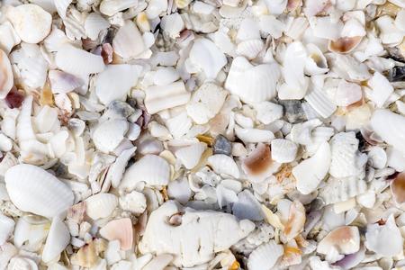 текстуры: Seashell Текстуры
