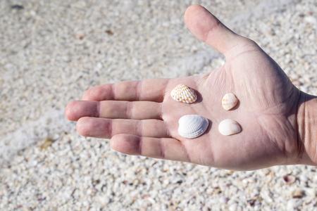 shelling: Hand Holding Small Seashells on the Beach