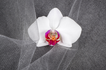 White Orchid Flower on Gray Tulle Fabric