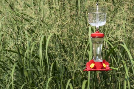 moat: Hummingbird Feeder with an Ant Moat Stock Photo