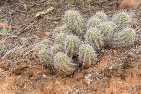Patches of Cactus in the Desert
