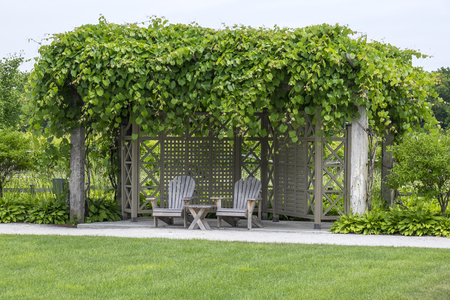 adirondack: Two Adirondack Chairs Under a Grape Trellis in a Vineyard Stock Photo