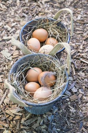 brown eggs: Freshly Laid Brown Eggs Stock Photo