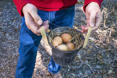 brown eggs: Man Holding Brown Eggs in a Bucket Stock Photo