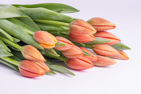 Bunch of Peach Color Tulips Close Up Stock fotó