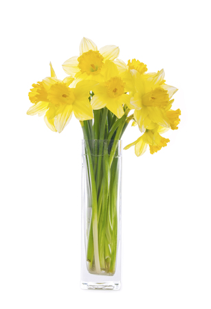 Bouquet of Yellow Daffodils in a Glass Vase Isolated on White Imagens