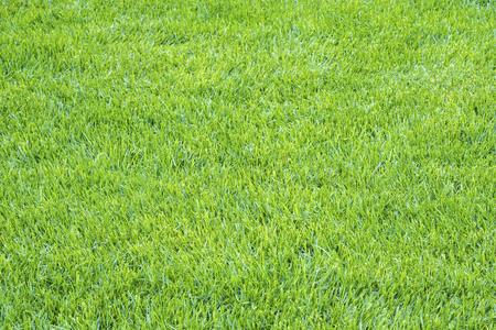 Light Green Grass Texture Background