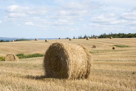 Bales of Hay in the Field in Western Part of Prince Edward Island Canada Reklamní fotografie