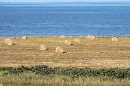 Bales of Hay in the Field in Western Part of Prince Edward Island Canada 写真素材