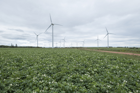 Potato Farming and Generation of Electricity from Wind Turbines