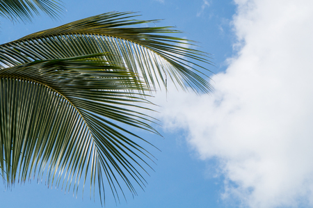 Palm leaves and sky with cloud in the background Stock Photo