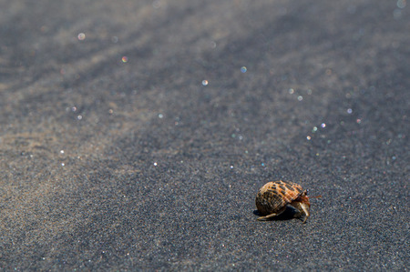 A hermit crab on a black sand beach in Thailand