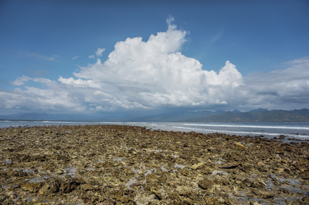 researching: Dead coral seabed at low tide