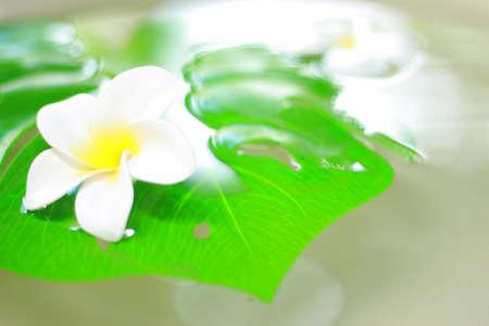 frangipani tropical spa concept