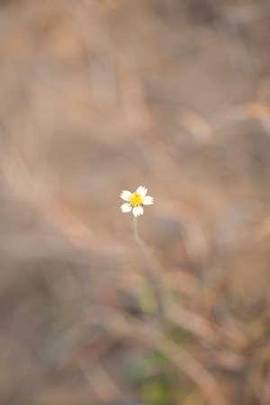 flowers in winter season in thailand photo