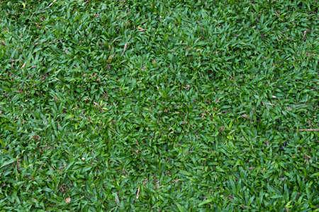 herbe: Grass texture