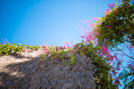 Beautiful pink bougainvillea flowers and blue sky