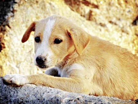 deplorable: Little sad dog on the stone
