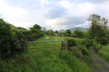 Sheep in Troutbeck Stock Photo