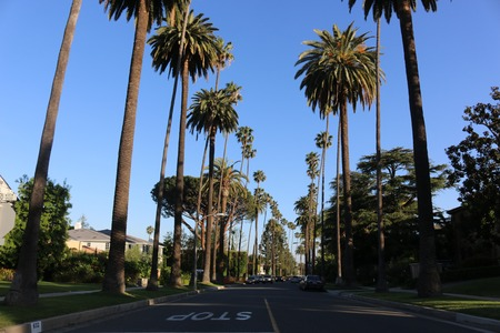 palm lined: Beverly Hills Palm Trees