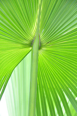 cycad: A close-up of a lush cycad plant