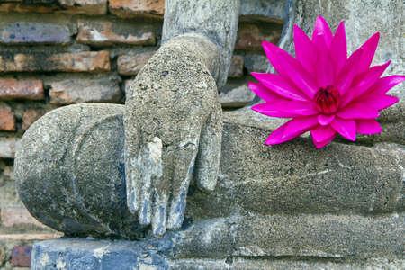 pink lotus on fetch Buddha , city old Sukothai monk , Thailand ,  photo
