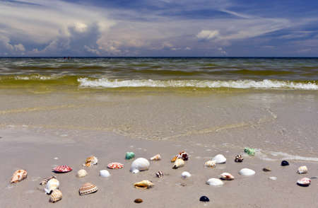 the shell on Huahin beach , Thailand ,  photo