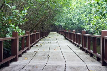 seashore footpath in mangrove forest , Pran Buri city  , Thailand ,  photo