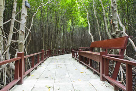 the residence on the footpath in mangrove forest ,  photo