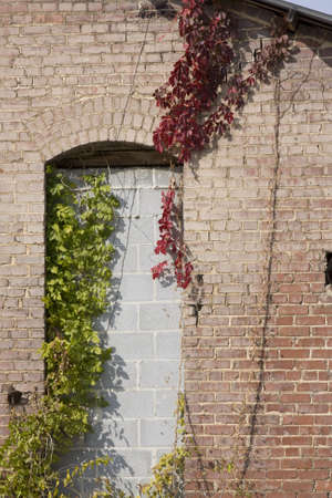 Old brick wall with vines
