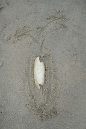 anima: Cuttlefish on the beach in Thailand current rare.