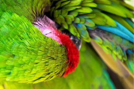 aras: Twisting Green Macaw