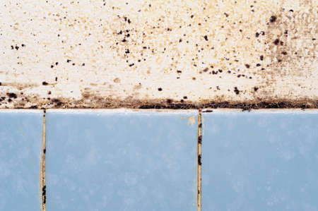 mold in the bathroom. caused by moisture and lacking ventilation. Stock Photo
