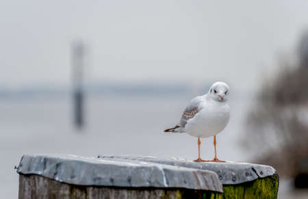 Seagull resting at dolphin at daylight in Hamburg, Germany.