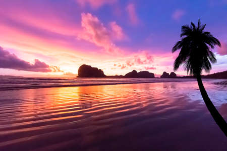 Coconut tree at the beach on sunset