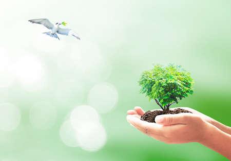 手と自然の背景に飛んでいる鳥に大きな木のハート形。