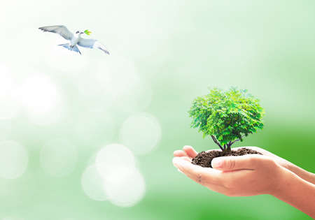 Heart shape of big tree in hands and bird flying on nature background.