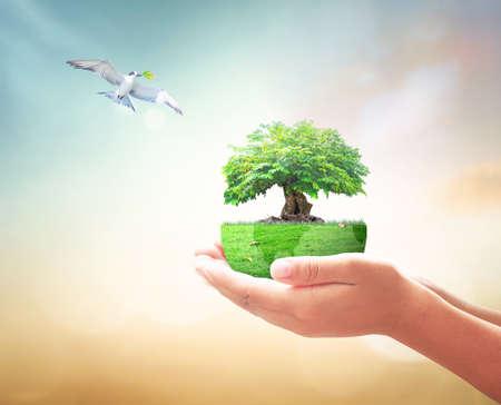 En forme de coeur de grand arbre dans les mains et les oiseaux qui volent sur la nature de fond. Banque d'images - 56526915