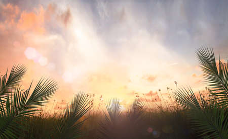 Palm Sunday concept: Palm leaves over meadow sunset background