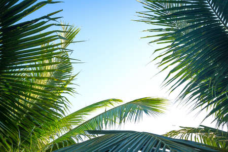 Palm sunday concept: Leaves frame of coconut branches with cloudy blue sky background 免版税图像