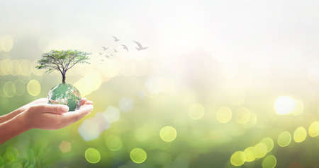 World environment day concept: Human hands holding earth global and tree over blurred green city background. 免版税图像