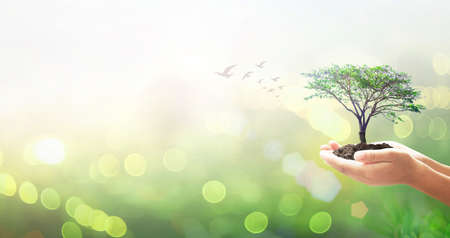 World environment day concept: Human hands holding big tree over green forest background